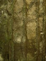 Old Stone 01 by DH-Textures