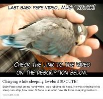 Pepe last baby video, must watch! by emmil