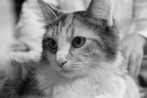 Black and White Cat by chase009