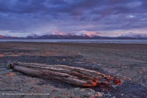 Brooding Driftwood by MSimpsonPhotos