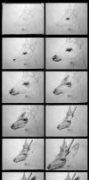 Deer - Step by step - Pencil by Azany