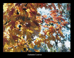 Autunm Leaves by Stella265