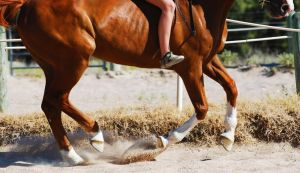 Pick Them Feet Up by EquineImages