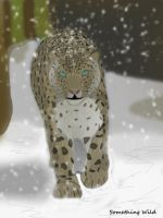 Snow leopard in the Wild by SomethingWild7
