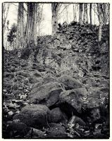 Trees and Stones 02 by HorstSchmier