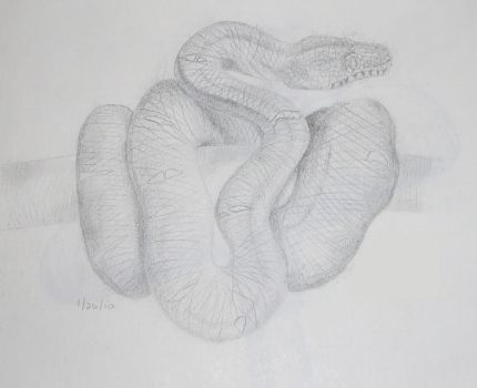 Snake Sketch by susumi3