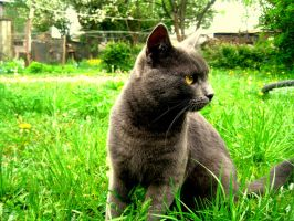 Cat in my countryside by mistty002
