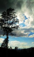 Tree and Clouds by qimoo