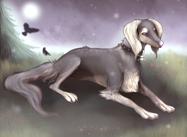 Collie by canaveral