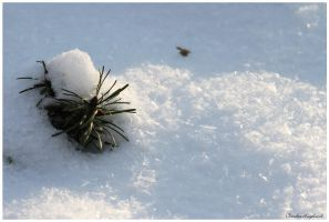 pine cone in snow by Claudia008