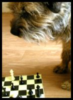 Chess, Five by Ewig