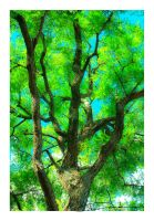 Arbre by Chichimalpopoca