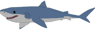 Great White Shark by kylgrv