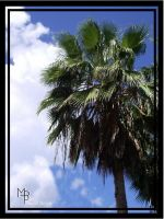 Caribbean Palm by ModestBeauty