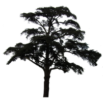 Scots Pine PNG.. by Alz-Stock-and-Art