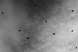 The birds. by ShannonEva