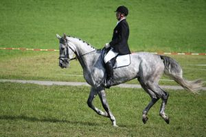 Dressage001 by Wonkystock