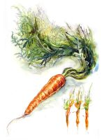 Carrot Study II by amwah