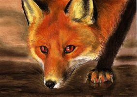 Red Fox by Culpeo-Fox