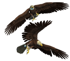 Eagles PNG Stock by Roys-Art