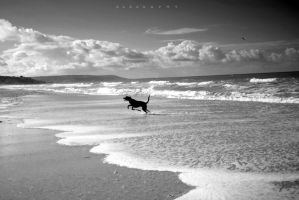 Dog Offshore by alahay