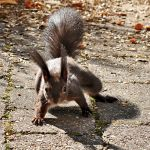good morning, where's my nut by brijome