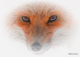 Fox Eyes by Les-Piccolo