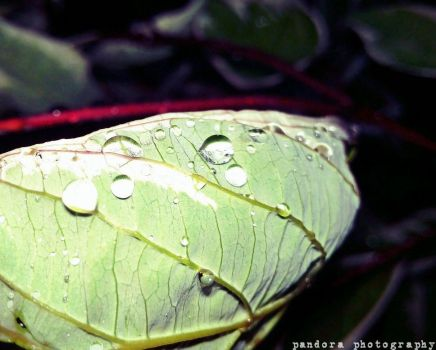 Leafy Droplets by LivingDEADkitty