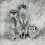 meercats by LeaHenning