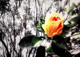 Blossoming Life [Re-edit] by XTheGoldenAppleX
