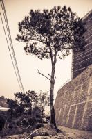 tree by KAWILE