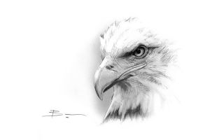 Sketchcard Bald Eagle by BenPostmus
