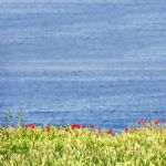 Who says flowers do not love the sea... by 8moments