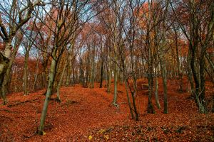 Baciu forest - 2 by Reiep