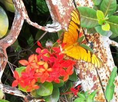 Butterfly and Red flowers 2 by Lhastor