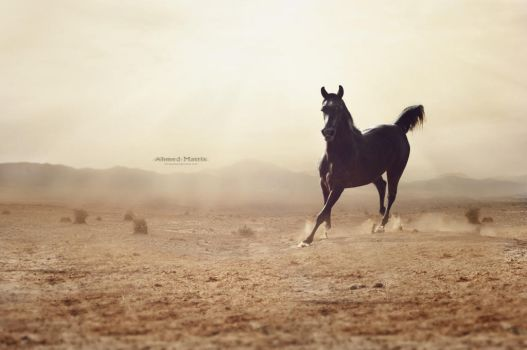 The black horse by Ahmed-Matrix