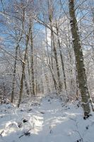 Trail Covered in Snow by happeningstock