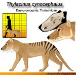 Thylacinus cynocephalus model by CenozoicKing