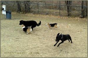 Dog Park Herding 1-29-13 by Cmac13