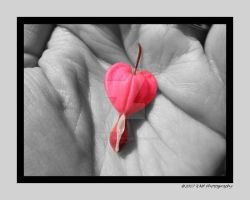 Your Heart in My Hand edit by picworth1000wrds