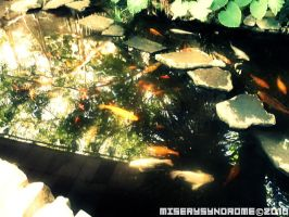 Hello there fishey by MiserySyndromex3