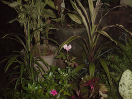 Plants in the garden at night by Shuberth