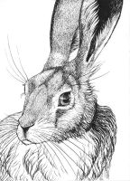 Hare by Forestia