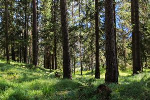 Forest 86 by Pagan-Stock