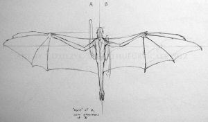 Wing Proportion Test Sketches by LeccathuFurvicael