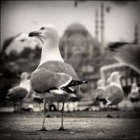 Istanbul is mine. by KeremOkay