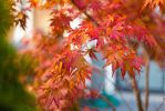 The colors of fall by manleyaudio