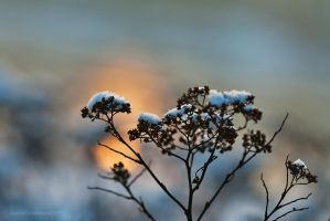 Touch Of Winter V by JoannaRzeznikowska