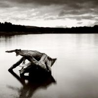 vallymount driftwood by The--Baron