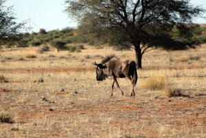 Auob Country Lodge, Namibia 14 by ElSpaZo